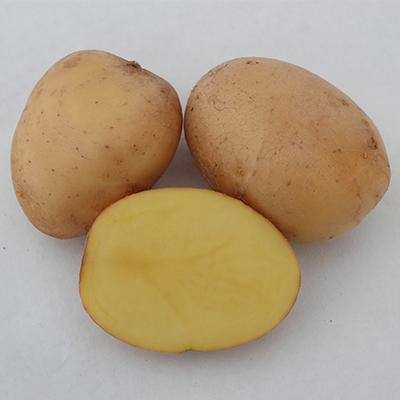 arany-chipke